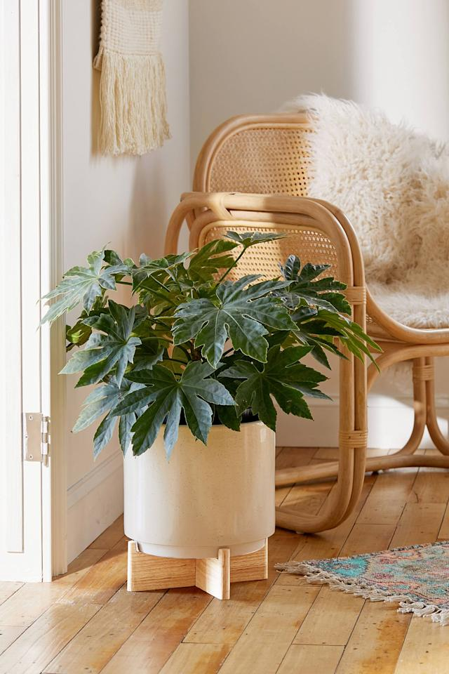 """<p>This <a href=""""https://www.popsugar.com/buy/Cecily-10-Planter-Stand-489484?p_name=Cecily%2010%22%20Planter%20%2B%20Stand&retailer=urbanoutfitters.com&pid=489484&price=59&evar1=casa%3Aus&evar9=46598422&evar98=https%3A%2F%2Fwww.popsugar.com%2Fphoto-gallery%2F46598422%2Fimage%2F46601114%2FCecily-10-Planter-Stand&list1=shopping%2Chome%20decor%2Chome%20shopping&prop13=api&pdata=1"""" rel=""""nofollow"""" data-shoppable-link=""""1"""" target=""""_blank"""" class=""""ga-track"""" data-ga-category=""""Related"""" data-ga-label=""""https://www.urbanoutfitters.com/shop/cecily-10-planter-stand?category=apartment-room-decor&amp;color=012&amp;type=REGULAR"""" data-ga-action=""""In-Line Links"""">Cecily 10"""" Planter + Stand</a> ($59) will bring life into any room.</p>"""