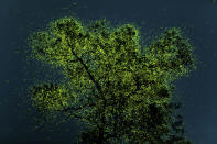 """<p>Prathamesh Ghadekar of India won the People's Choice prize with this photo of fireflies congregating on a tree in India. </p> <p>To see even more of the winners from this year's contest, <a href=""""https://www.nature.org/en-us/"""" rel=""""nofollow noopener"""" target=""""_blank"""" data-ylk=""""slk:visit The Nature Conservancy's website"""" class=""""link rapid-noclick-resp"""">visit The Nature Conservancy's website</a>. </p>"""