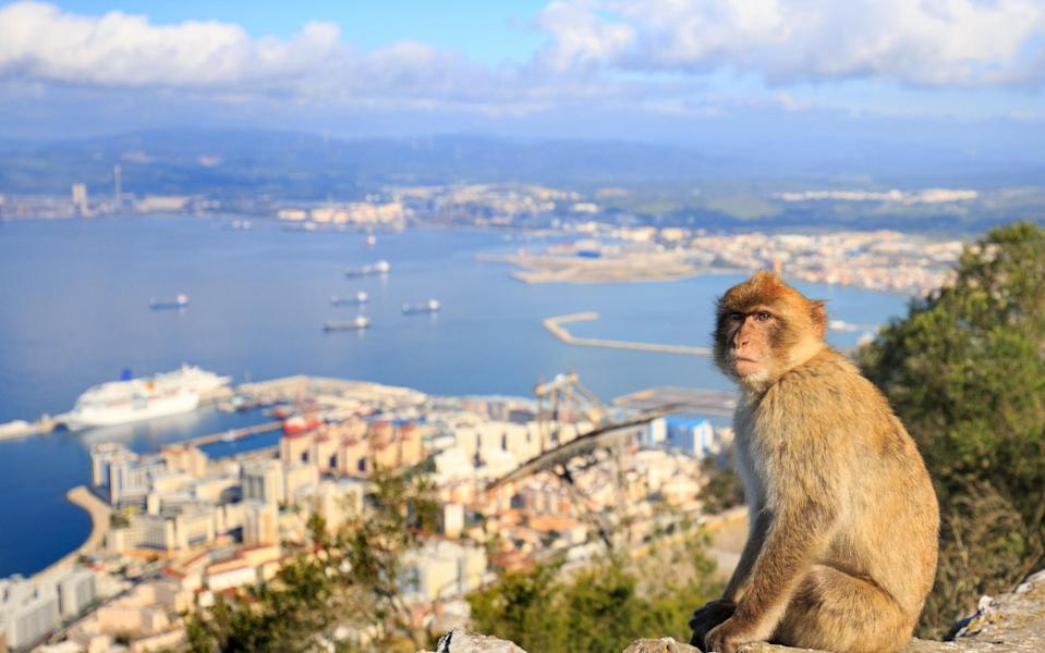 Watch out for Barbary macaques in Gibraltar - Getty