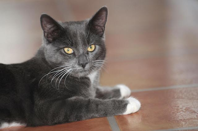 Smokie at its home in Hull. The five-month-old cat was found by workers at a recycling centre in Hull last week after they heard him crying in one of the bins.