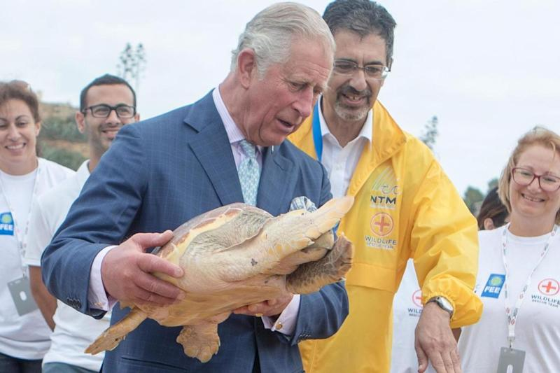 Official visit: Prince Charles releases a rehabilitated turtle into the sea on Golden Bay beach in Malta (PA)