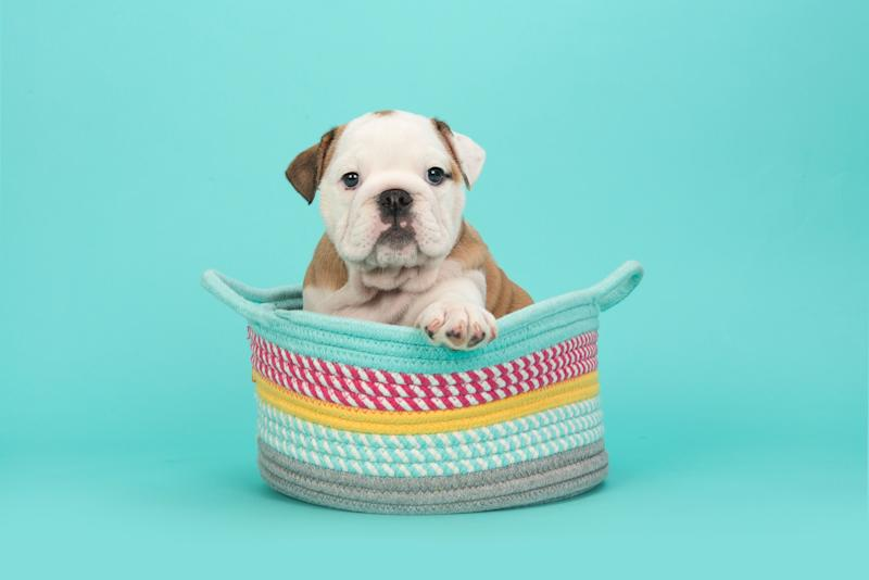 Keep your pup occupied with an interactive toy. (Photo: Getty Images)