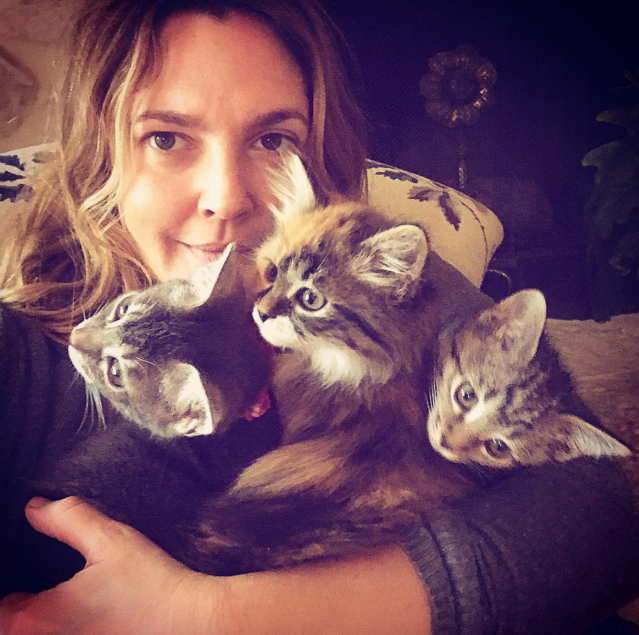 "<p>""If you can believe, my daughters and I went to rescue a cat and came home with three kittens in need,"" the <em>Santa Clarita Diet</em> star revealed to her followers. ""#thekitties #rescue #christmasmiracle or I just became the crazy cat lady? Names are (from left to right) LUCKY (Olive's cat) PEACH (Frankie's cat) FERN (mine) all females #GIRLGANG."" The new members of Drew's clan will have to share the love with their family dog, Douglas, who the actress has said helped her cope with her divorce from ex Will Kopelman. (Photo: <a href=""https://www.instagram.com/p/BdxwTUWhjkj/?hl=en&taken-by=drewbarrymore"" rel=""nofollow noopener"" target=""_blank"" data-ylk=""slk:Drew Barrymore via Instagram"" class=""link rapid-noclick-resp"">Drew Barrymore via Instagram</a>) </p>"
