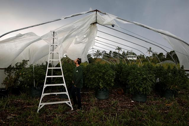 <p>With a plume of volcanic emissions, or laze (a term combining lava and haze) rising above him, Josh Doran, 22, repairs one of his family's greenhouses on the outskirts of Pahoa during ongoing eruptions of the Kilauea Volcano in Hawaii, June 7, 2018. (Photo: Terray Sylvester/Reuters) </p>