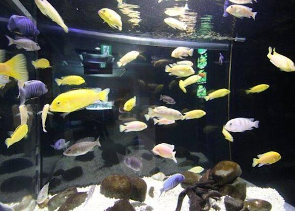 The colorful fish of the African Fish Tank