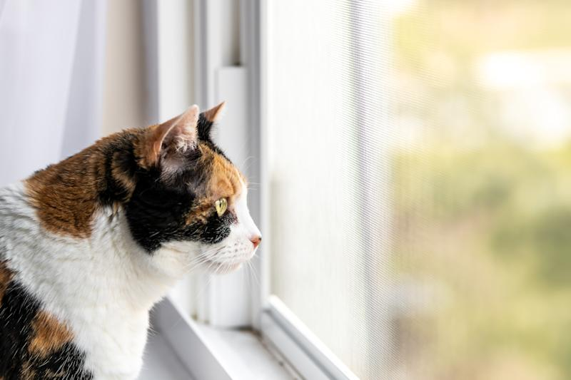 Coronavirus: Owners are safe to allow their cats outside