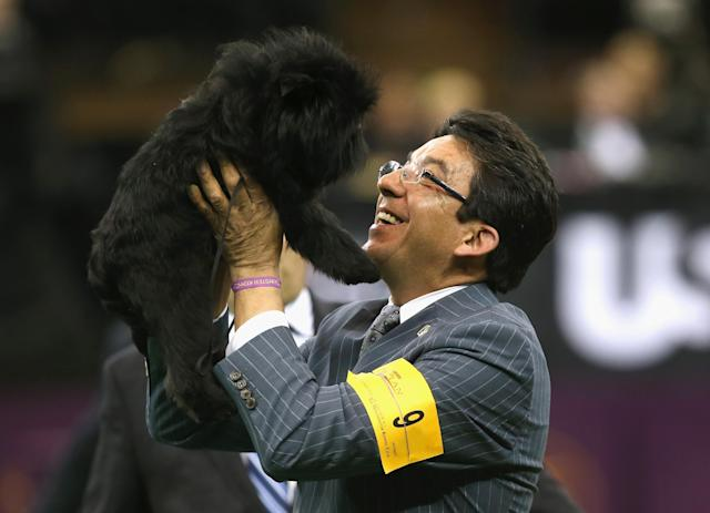 NEW YORK, NY - FEBRUARY 12: Dog handler Ernesto Lara hoists Banana Joe into the air after the Affenpincher won Best in Show at the 137th Westminster Kennel Club Dog Show on February 12, 2013 in New York City. A total of 2,721 dogs from 187 breeds and varieties competed in the event, hailed by organizers as the second oldest sporting competition in America, after the Kentucky Derby. (Photo by John Moore/Getty Images)