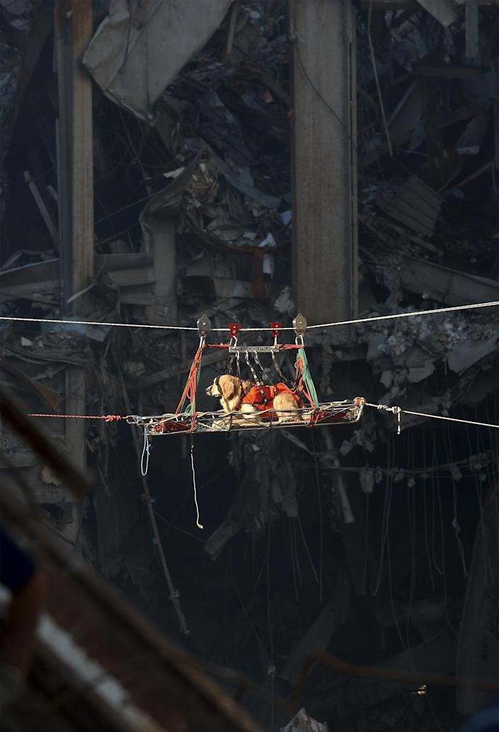 A rescue dog is transported out of the debris of the World Trade Center, September 15, 2001. (REUTERS/HO/U.S. Navy Photo by Journalist 1st Class Preston Keres)