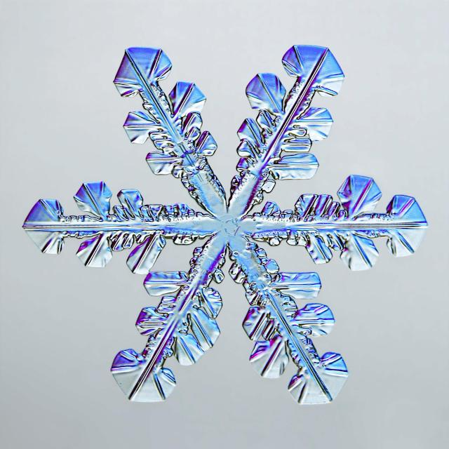 This snowflake is beautiful (Picture: Caleb Foster)