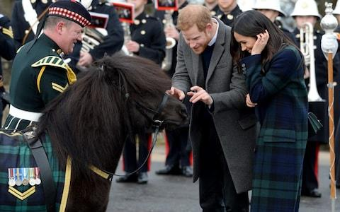The Royals attempted to interact with the pony - but Prince Harry didn't manage to escape without a nip - Credit: Doug Peters/EMPICS Entertainment