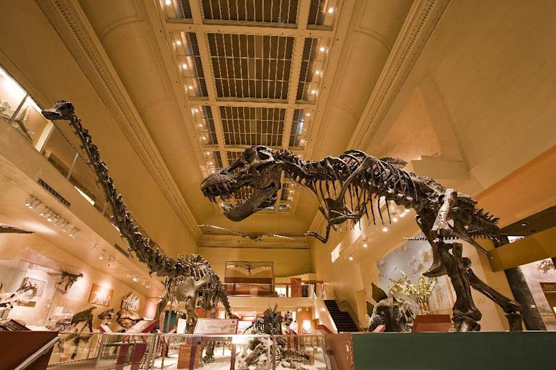 This undated handout photo provided by the Smithsonian Institutions shows the current Dinosaur Hall at the Smithsonian's Museum of Natural History. Energy businessman David H. Koch is donating a record $35 million to the Smithsonian's National Museum of Natural History to build a new dinosaur hall on the National Mall. The Smithsonian is announcing the gift Thursday from the executive vice president of Koch Industries Inc. of Wichita, Kan. It is the single largest gift in the museum's 102-year history. (AP Photo/Chip Clark, Smithsonian Institution)