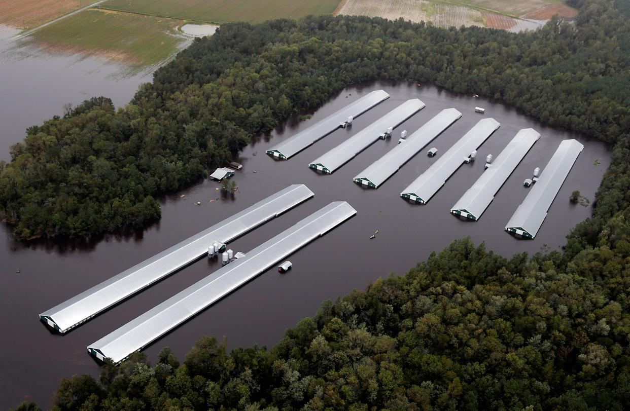 Chicken farm buildings are inundated with floodwater from Hurricane Florence near Trenton, North Carolina, Sunday, Sept. 16, 2018. (Photo: AP Photo/Steve Helber)