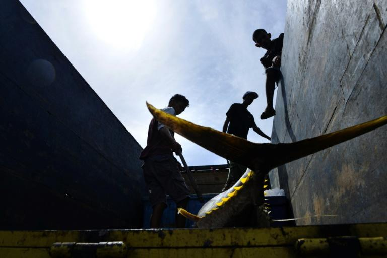 Tuna value dropping, industry must plan ahead: report