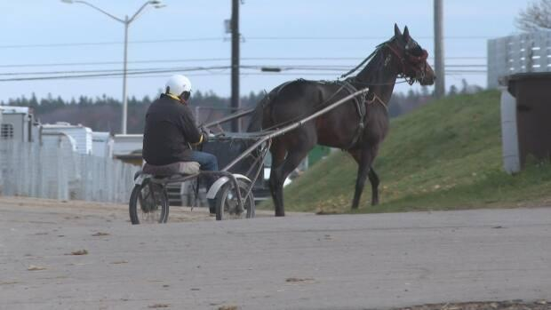 A horse gets some morning exercise at Red Shores in Charlottetown in November 2020.  (Brian Higgins/CBC - image credit)