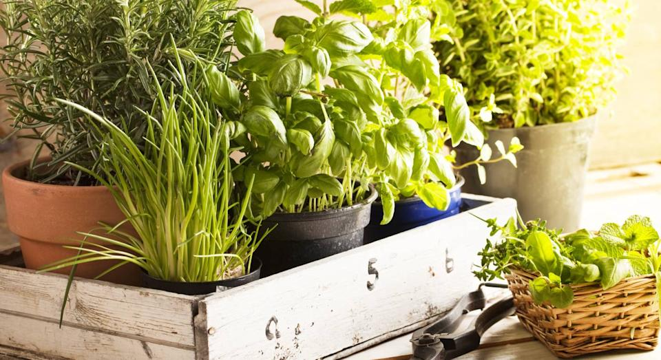 This £32 gadget allows you to grow your own herb garden inside. (product not pictured, Getty Images)