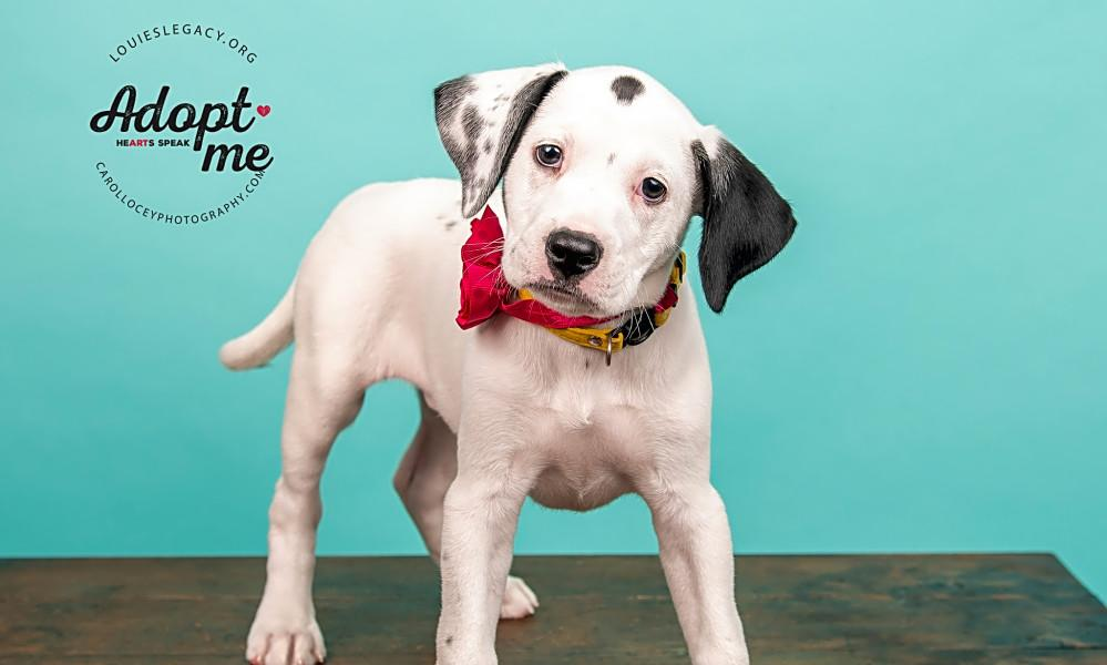 6 perfect puppies to adopt now in Cincinnati