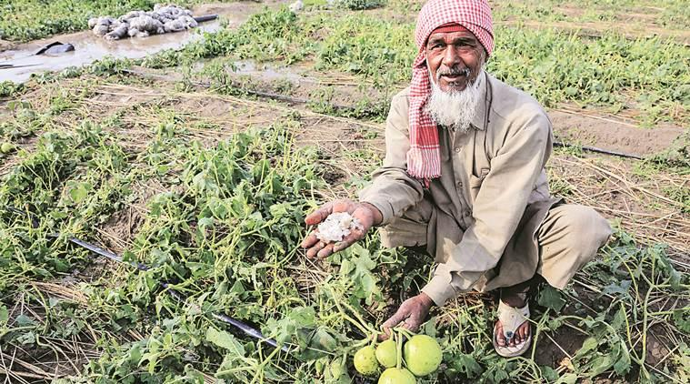 North India weather, Delhi heavy rainfall, Delhi hailstorms, northern India hailstorms, farmers crop damaged, punjab rains farmers, punjab farms rains, wheat crops damaged, indian express