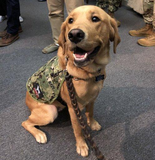 Although service dogs are commonly seen at the Uniformed Services University of the Health Sciences, Shetland, a retriever mix, is a clinical instructor in the Department of Medical and Clinical Psychology. (Julie Rovner/KHN)
