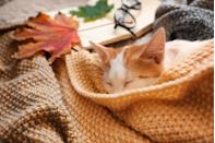 Cute little kitten sleeping on plaid