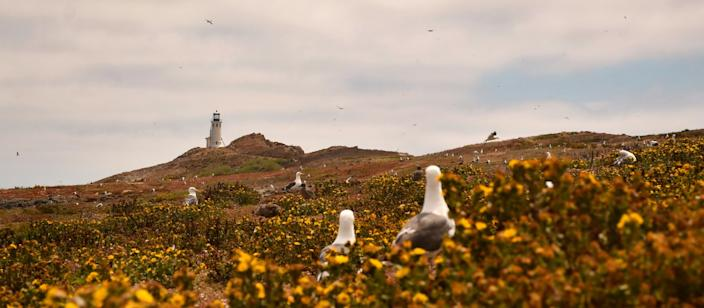 """Anacapa Island, part of Channel Islands National Park, is home to thousands of western gulls and a 1932 light station. <span class=""""copyright"""">(Christopher Reynolds / Los Angeles Times)</span>"""