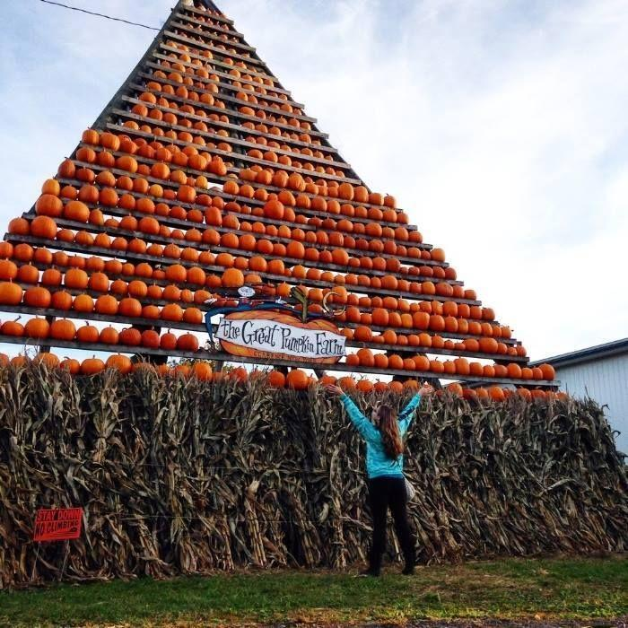 """<p>Get ready to see your kids' eyes light up when they see <a href=""""https://www.greatpumpkinfarm.com/"""" rel=""""nofollow noopener"""" target=""""_blank"""" data-ylk=""""slk:the Great Pumpkin's Farm's"""" class=""""link rapid-noclick-resp"""">the Great Pumpkin's Farm's</a> amazing pumpkin tower. Once you've taken your family photo in front of the <a href=""""https://go.redirectingat.com?id=74968X1596630&url=https%3A%2F%2Fwww.tripadvisor.com%2FTourism-g47476-Clarence_New_York-Vacations.html&sref=https%3A%2F%2Fwww.countryliving.com%2Flife%2Ftravel%2Fg21273436%2Fpumpkin-farms-near-me%2F"""" rel=""""nofollow noopener"""" target=""""_blank"""" data-ylk=""""slk:Clarence, New York"""" class=""""link rapid-noclick-resp"""">Clarence, New York</a>, attraction, head to the food and candy-packed """"Pumpkin Palace"""" to load up on apple cider donuts and other treats. </p><p><a class=""""link rapid-noclick-resp"""" href=""""https://go.redirectingat.com?id=74968X1596630&url=https%3A%2F%2Fwww.tripadvisor.com%2FAttractions-g47476-Activities-Clarence_New_York.html&sref=https%3A%2F%2Fwww.countryliving.com%2Flife%2Ftravel%2Fg21273436%2Fpumpkin-farms-near-me%2F"""" rel=""""nofollow noopener"""" target=""""_blank"""" data-ylk=""""slk:PLAN YOUR TRIP"""">PLAN YOUR TRIP</a><br></p>"""