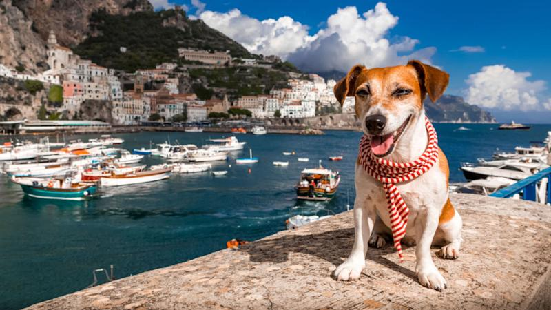 The ruling was a big win for Italian dogs that feel ruff - and their owners (file pic)