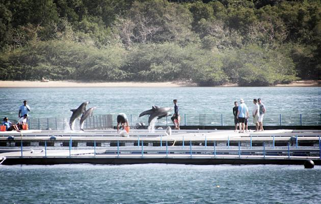 One of Marine Life Park's dolphins, Wen Wen, died upon arriving in Singapore. (Photo courtesy of ACRES)