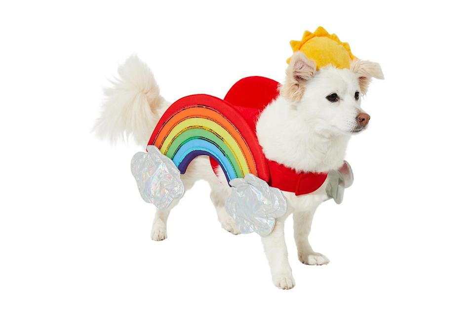 """<p><a href=""""https://people.com/pets/halloween-costumes-for-small-pets-guinea-pigs-hamsters-lizards/"""" rel=""""nofollow noopener"""" target=""""_blank"""" data-ylk=""""slk:Halloween is approaching"""" class=""""link rapid-noclick-resp"""">Halloween is approaching</a>, and most pet owners can agree one of the best parts of the holiday is getting to see your furry friend in costume. Read on to see some of the cutest Halloween outfit options available for dogs this year. </p> <p><strong>Buy it!</strong> Rainbow Dog Costume, $16.99; <a href=""""https://www.anrdoezrs.net/links/8029122/type/dlg/sid/PEO25HalloweenCostumesforDogsthatWillHaveTrickorTreatersHowlingwithJoykbender1271PetGal12909733202109I/https://www.chewy.com/frisco-rainbow-dog-cat-costume/dp/287466"""" rel=""""sponsored noopener"""" target=""""_blank"""" data-ylk=""""slk:Chewy.com"""" class=""""link rapid-noclick-resp"""">Chewy.com</a></p>"""