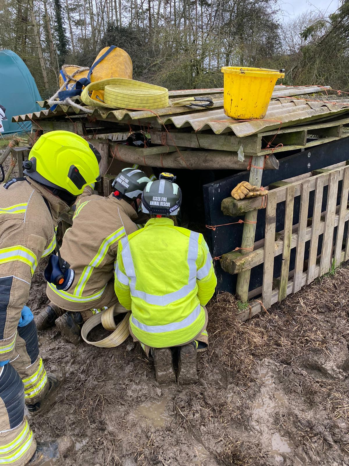 Dolly went for a lie down in her sty and got stuck in the mud. (Essex County Fire and Rescue Service/ PA)