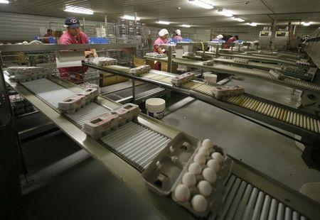 Eggs are processed at an egg farm in San Diego County in this picture taken July 29, 2008.  REUTERS/Mike Blake