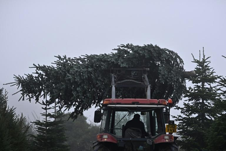 Prices could rise for Christmas trees because of higher costs of imports and raw materials (AFP/BEN STANSALL)