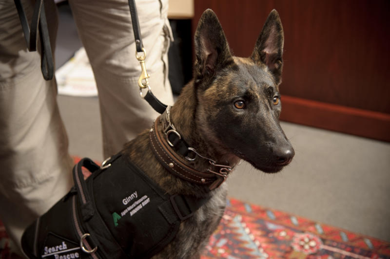 Alpha introduces mine search-rescue dog in Va