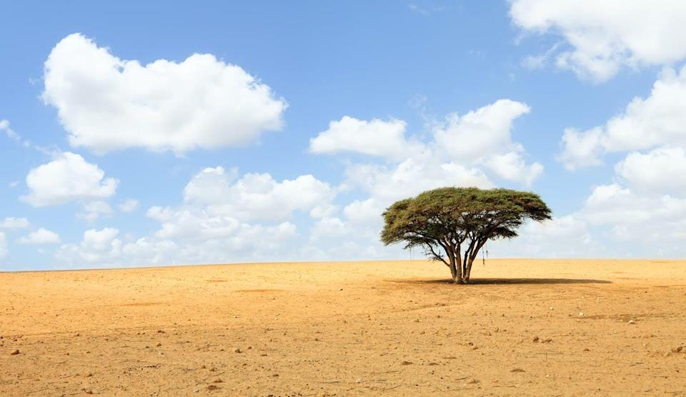 """<span class=""""attribution""""><a class=""""link rapid-noclick-resp"""" href=""""https://www.shutterstock.com/es/image-photo/lonely-acacia-tree-desert-on-cloudy-90141856"""" rel=""""nofollow noopener"""" target=""""_blank"""" data-ylk=""""slk:Shutterstock / Protasov AN"""">Shutterstock / Protasov AN</a></span>"""