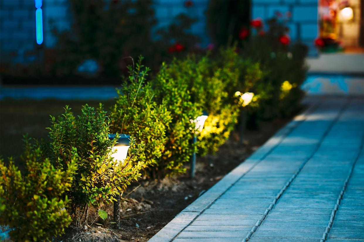 Night View Of Flowerbed With Flowers Illuminated By Energy-Saving Solar Powered Lanterns
