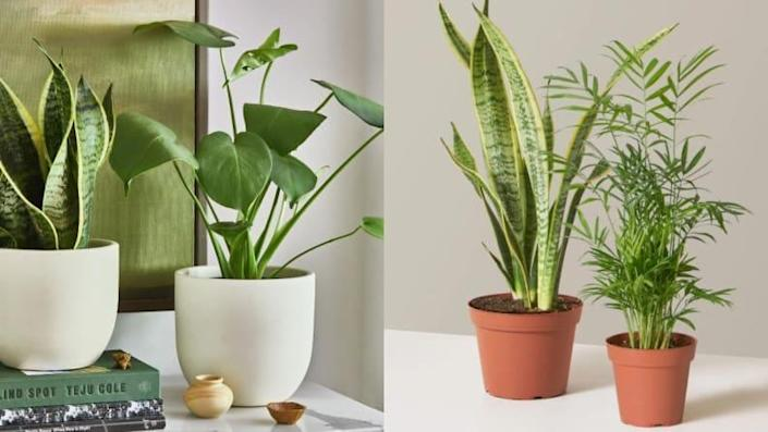 For the plant lover: A plant from The Sill