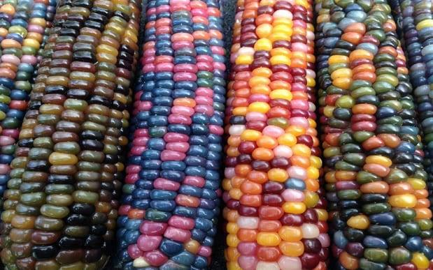 Glass Gem rainbow corn photos have been shared on social media   - Facebook / Mark Basaluddin
