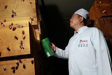 A staff member shows cockroaches in shelves to the camera at a farm operated by pharmaceutical company Gooddoctor in Xichang, Sichuan province, China August 10, 2018.  REUTERS/Thomas Suen