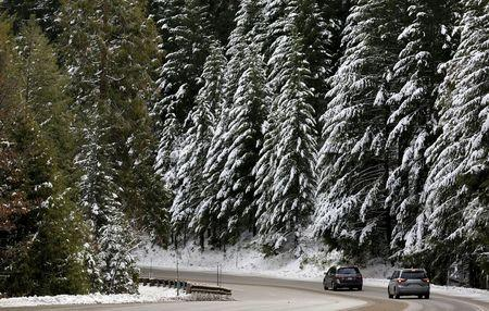 Cars pass by trees laden with snow along Highway 50, west of South Lake Tahoe, California, December 30, 2015. The first snow survey of the season has shown an above-average snow fall so far this winter. REUTERS/Fred Greaves