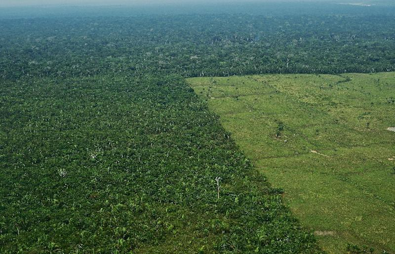 Deforestation in the Amazon rainforest and harm done to Brazil's indiginous people are issues that should push the EU to halt trade talks, according to some 340 groups in Europe and Latin America