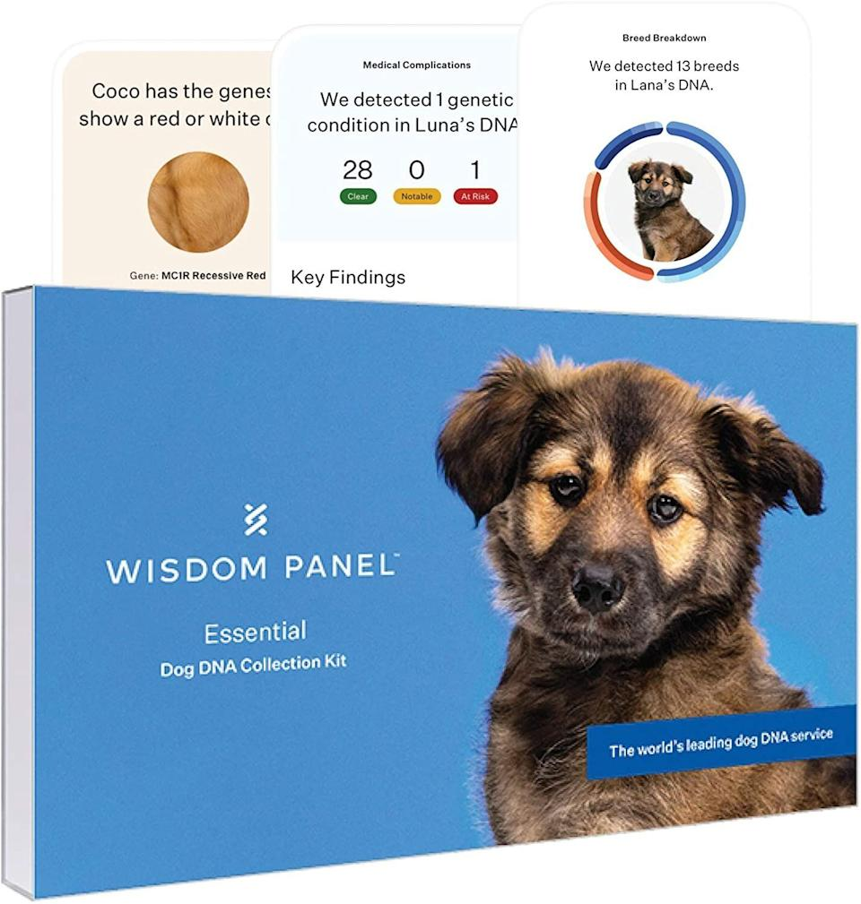 Wisdom Panel dog DNA Cyber Monday deal for 2020. (Photo: Amazon)