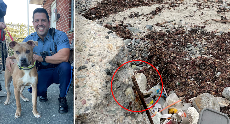 Police rescued Killer (left) after finding him tied up to this pole on a Massachusetts beach. Source: Massachusetts Police