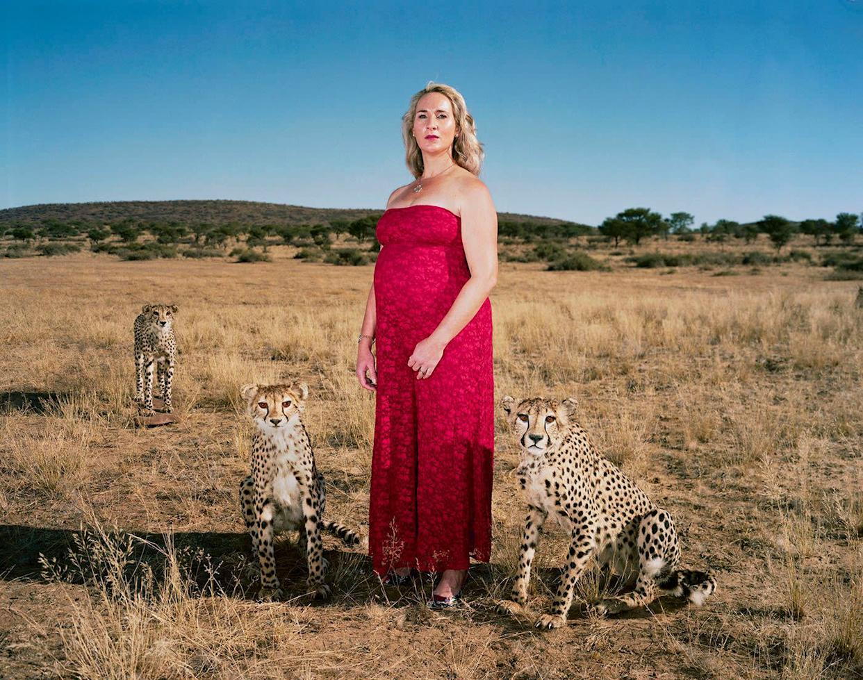 Danene and three full-mounted cheetahs.