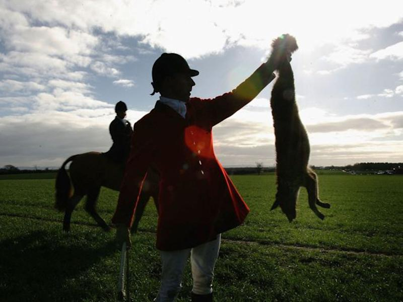 Police chiefs routinely turn blind eye to illegal fox-hunting as hunts go unchecked, report claims
