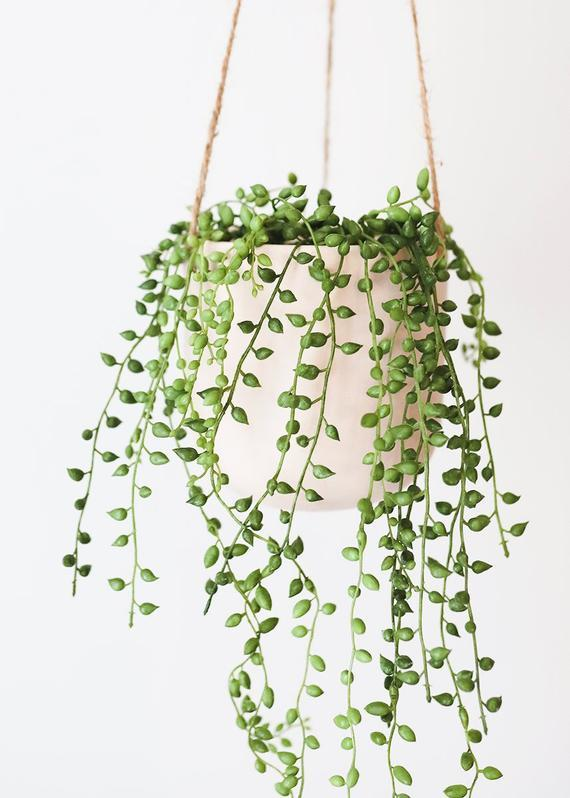 "Looking for the perfect plant to display on a shelf? Look no further. <br><br><strong><em><a href=""https://www.etsy.com/shop/NativeWestCalifornia?ref=simple-shop-header-name&listing_id=827105702"" rel=""nofollow noopener"" target=""_blank"" data-ylk=""slk:Shop Etsy"" class=""link rapid-noclick-resp"">Shop Etsy</a></em></strong> <br><br><strong>NativeWestCalifornia</strong> String of Pearls Live Succulent Hanging Plant, $, available at <a href=""https://go.skimresources.com/?id=30283X879131&url=https%3A%2F%2Fwww.etsy.com%2Flisting%2F827105702%2Fstring-of-pearls-6-inch-senecio%3F"" rel=""nofollow noopener"" target=""_blank"" data-ylk=""slk:Etsy"" class=""link rapid-noclick-resp"">Etsy</a>"