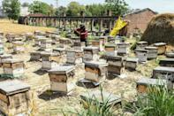 Without the journey, beekeepers have only two harvests a year, instead of four if they travel south (AFP/NARINDER NANU)