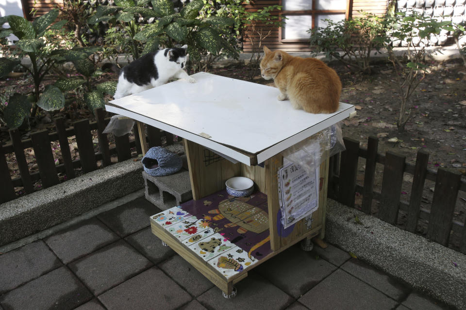 """Street cats """"Pipi,"""" left, and """"Laoda (boss)'' sit on the roof of a Midnight Cafeteria in Taipei, Taiwan, Sunday, Dec. 27, 2020. Launched in September, the """"cafeteria"""" is actually 45 small wooden houses painted by Taiwanese artists and scattered across Taipei. The idea is to give the cats a place to rest while making feeding them less messy. (AP Photo/Chiang Ying-ying)"""
