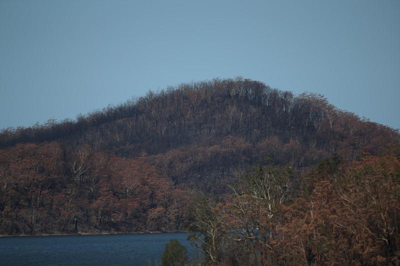 Charred forest is pictured on a hill burnt during the recent bushfires near Lake Conjola