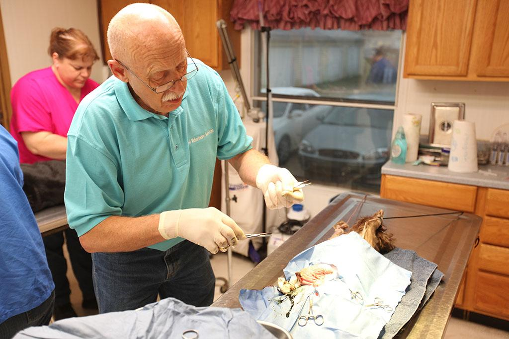 Mt. Pleasant, MI: Dr. Pol performing small animal surgery.