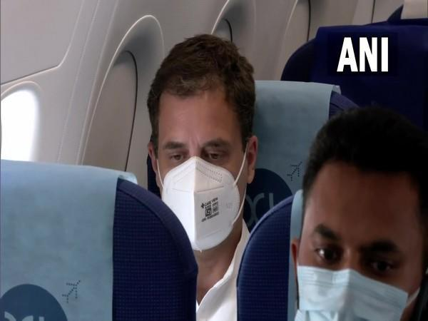 Congress leader Rahul Gandhi onboard a flight to Lucknow (Photo/ANI)