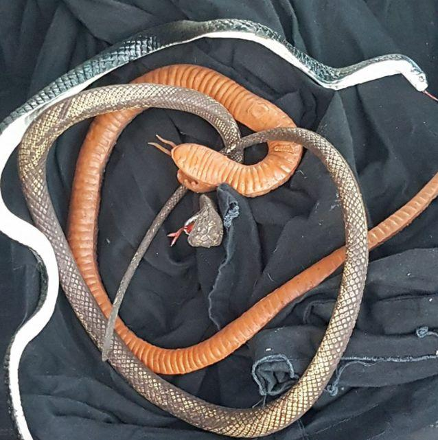 There were several fake snakes found. Source: Facebook
